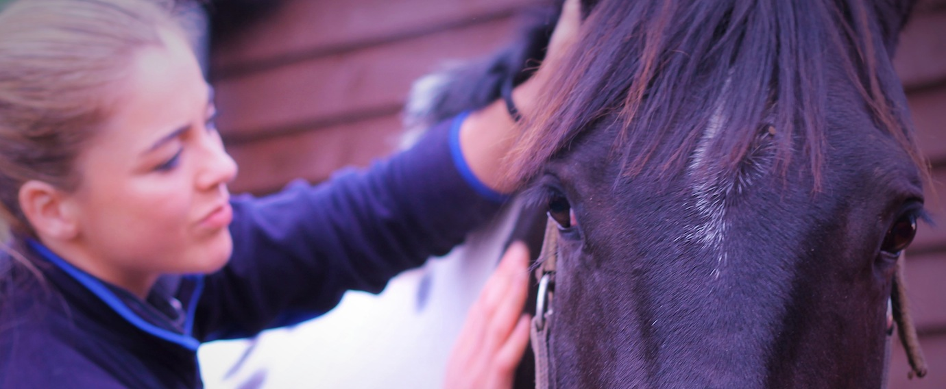 Equine Physio Services