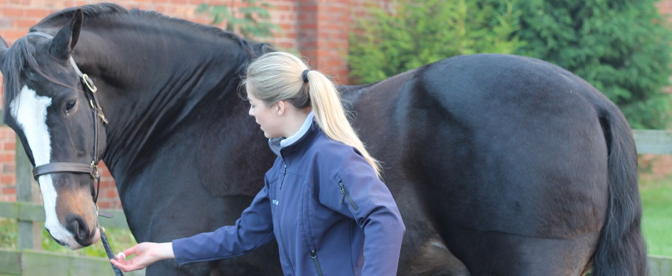 Equine Physio mint